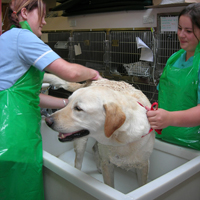 Macqueen Vets offers a high standard of 24 hour in-patient care