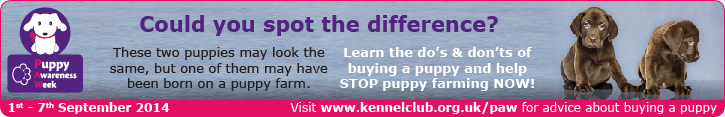 Help stop Puppy Farming now! Visit the Kennel Club website