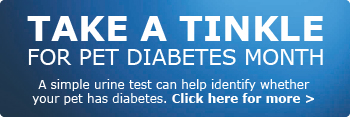 Just a tinkle: test your pet for Pet Diabetes Month