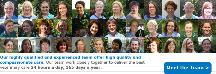 Experienced Team: We at Macqueens have a team of over 30, including vets, nurses, receptionists and support staff who work closely together to deliver the best veterinary care 24 hours a day, 365 days a year.