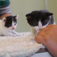 kitten sniffing nurse
