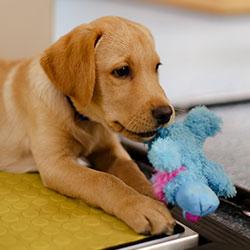 Puppy Weigh & Worm