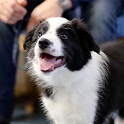 Puppy adolescent health check
