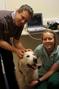 Andrew Frances, visiting canine and feline cardiology specialist