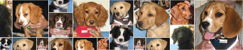 Puppy Party Graduates at Macqueen Vets, Wiltshire