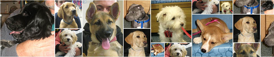 Puppy Party Graduates from Macqueen Vets