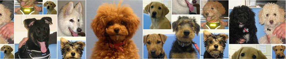 Puppy Party Graduates