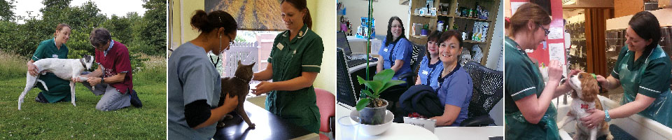 A selection of pictures of the facilities at Macqueen Vets