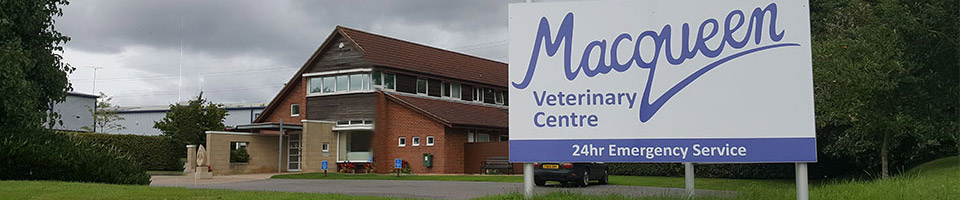 Macqueen Vets premises in Devizes, Wiltshire