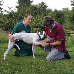 Ian Macqueen giving a whippet an orthopaedic examination