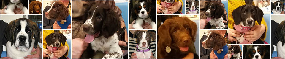 Macqueen Puppy Party Graduates
