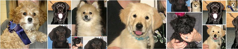 Puppy Party Graduates, April 2018