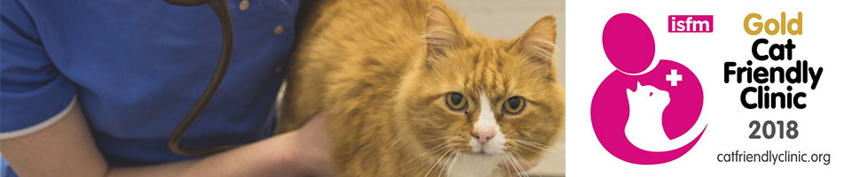 cat-friendly-clinic header