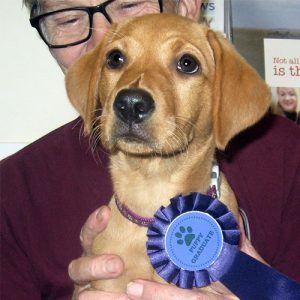Izzie the Labrador, Macqueen Puppy Party Graduate from Calne
