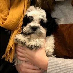 Matilda the Bichon x Shihtzu, Macqueen Puppy party graduate from Devizes