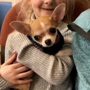 Piglet the Chihuahua, Macqueen Puppy Party Graduate from Devizes