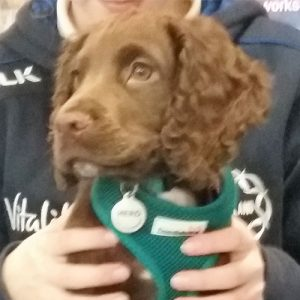 Hero the Cocker Spaniel, Macqueen Puppy Party Graduate from Derry Hill