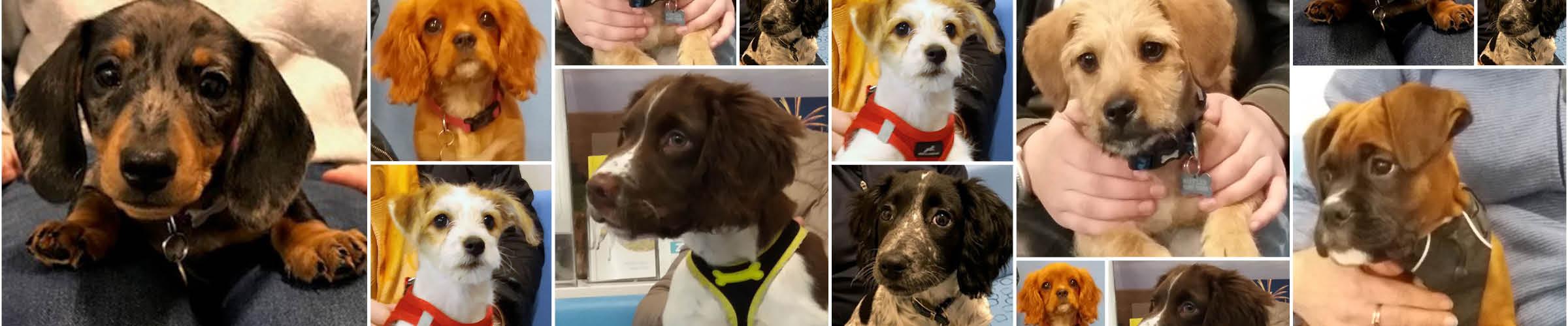 Macqueen Puppy Party Graduates Devizes Wiltshire