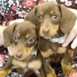 Poppy & Daisy the Dachshunds, Macqueen Puppy Party Graduates from Bishop Cannings