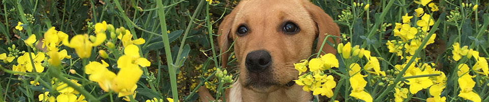 Puppy in flowers