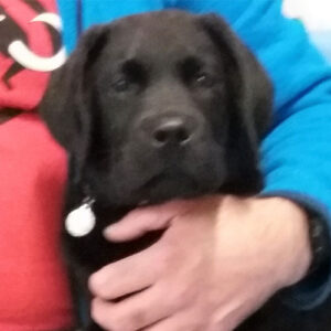 Kermit the Labrador, Macqueen Puppy Party Graduate from Devizes