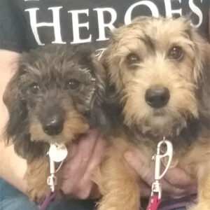 Rhubarb & Rufus the Dachshunds, Macqueen Puppy Party Graduates from Devizes
