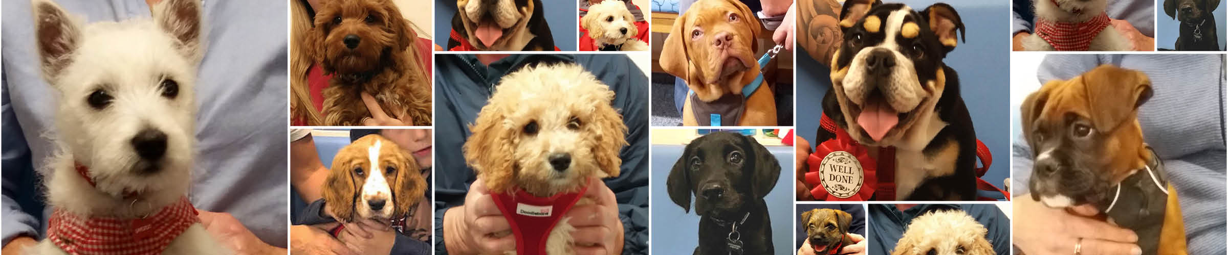 Macqueen Puppy Party Graduates from devizes, pewsey, potterne, rowde