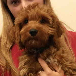 Max the Cockerpoo, Macqueen Puppy Party Graduate from Potterne