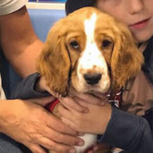 Mollie the Cocker Spaniel, Macqueen Puppy Party Graduate from Devizes