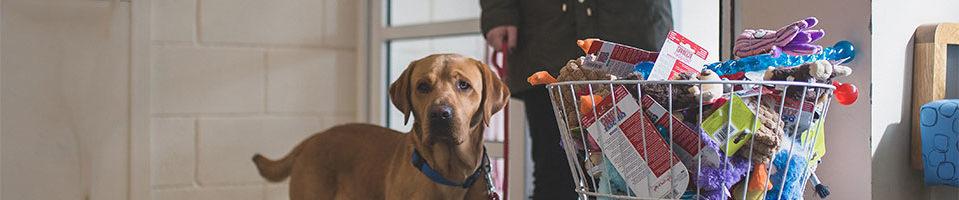 dog enters macqueen vets through the front door