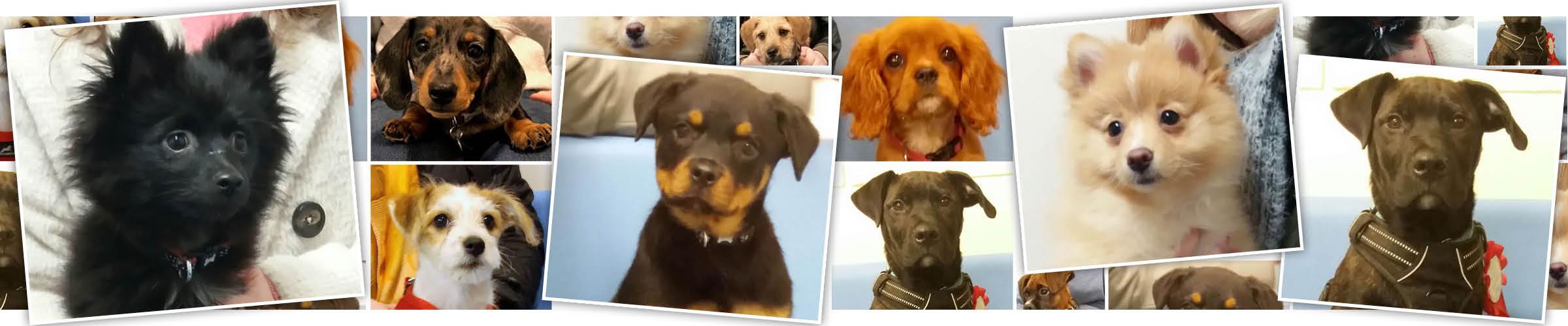 Macqueen Puppy Party Graduates from devizes, pewsey, potterne, market lavington