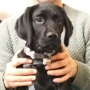 Arlo the Springerdor, Macqueen Puppy Party Graduate from All Cannings