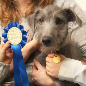 Flint the Lurcher, Macqueen Puppy Party Graduate from Calne